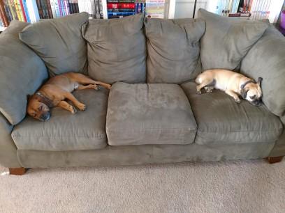 Walter and Francy Pants sleeping